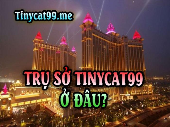 Tinycat99 là gì