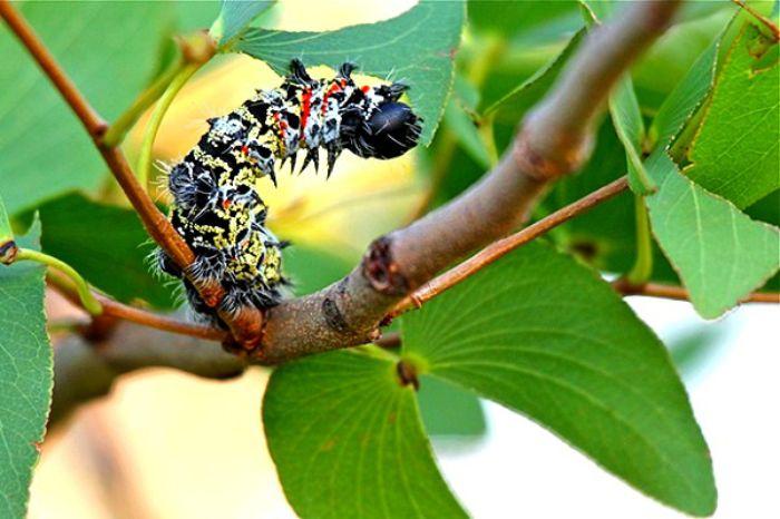 Thông thường nằm mơ liên quan côn trùng không mang đến cho bạn sự tốt đẹp