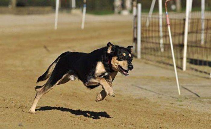 Chó là loài vật trong cuộc sống mà nhiều người yêu thích