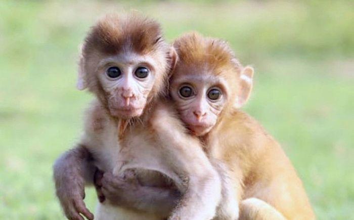 Nằm mơ thấy một chú khỉ con đáng yêu cho thấy bạn đang sở hữu một mong ước và ảo tưởng về cuộc sống