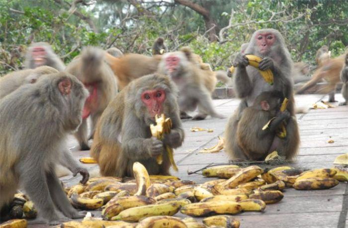 Nằm mơ thấy đàn khỉ đang ăn uống báo hiệu một điềm báo trong tương lai