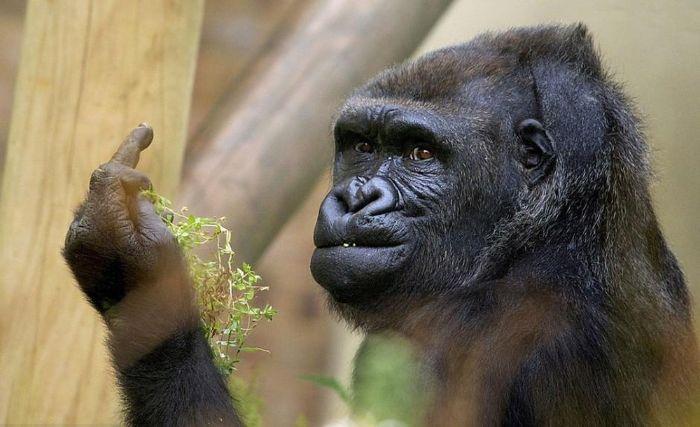 Mơ thấy con khỉ đang nhìn mình chọn cặp số 27 – 94