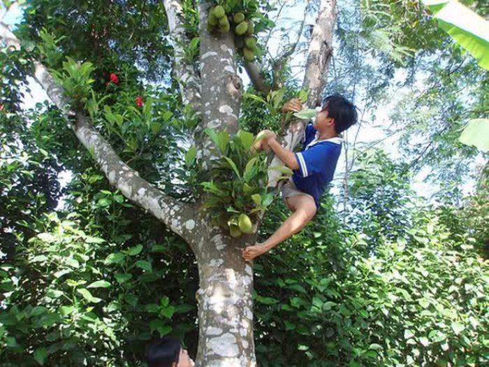 Nằm mơ thấy trèo cây hái quả mà bị rớt xuống chứng tỏ bạn sắp tới bạn sẽ gặp phải vô vàn những khó khăn