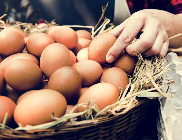 Vì sao lại nằm mơ thấy trứng gà?