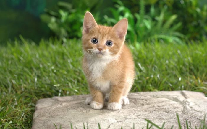 Chiêm bao tặng mèo vàng cho người lạ cho thấy bạn là người có sự cố gắng
