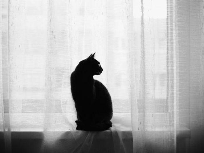 Theo quan niệm của các nước phương Tây, các quốc gia châu  u thì mèo được coi là điềm xui xẻo