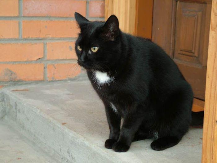 Chiêm bao mèo đen lạ đi vào nhà cho thấy tình cảm của bạn đang bị rạn nứt
