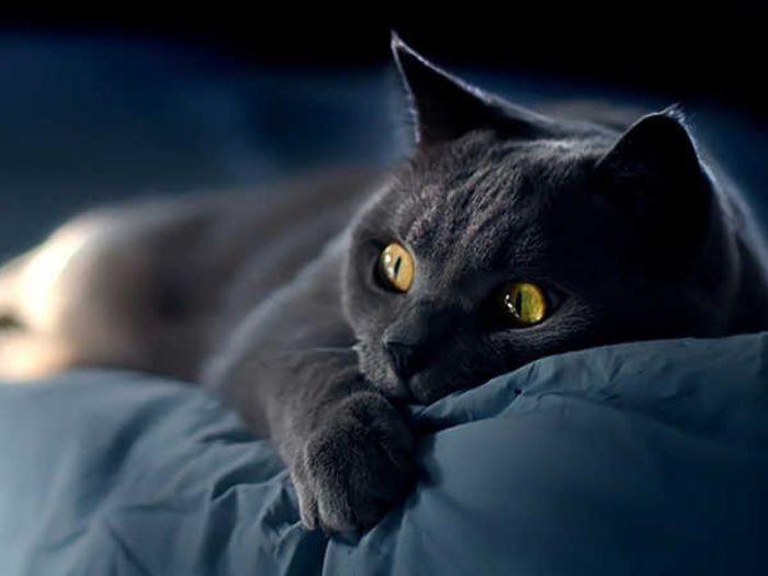 Giấc mộng bán mèo đen sẽ đem đến vận may cho bạn