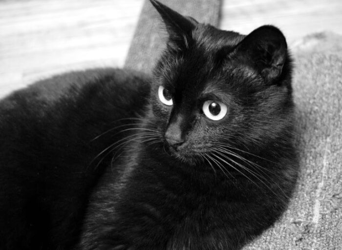 Mơ thấy mèo đen nhà hàng xóm chọn ngay các số 24 - 62 - 32
