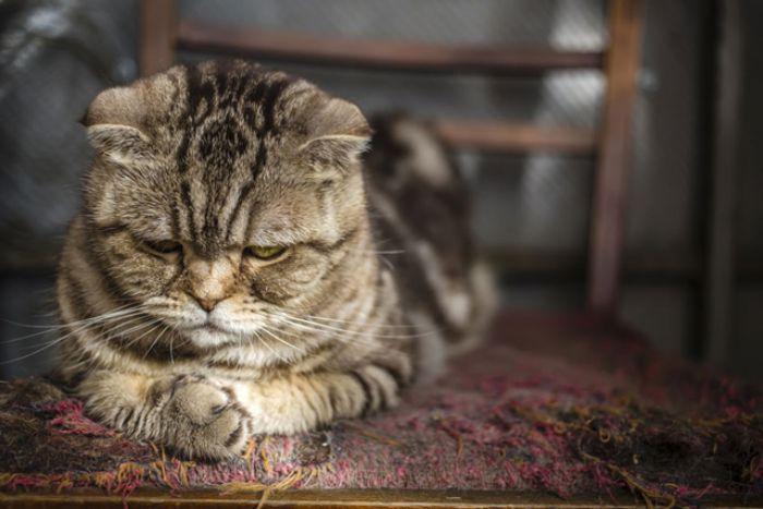 Việc mơ thấy mèo chết không hề mang theo điềm tốt lành