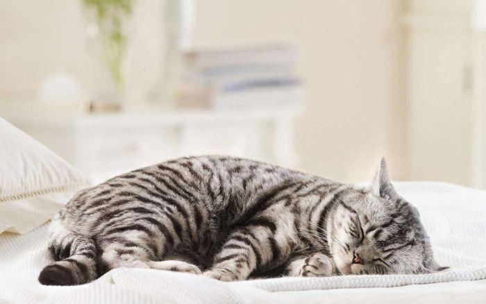 Người đi làm ăn xa mơ đập chết mèo cho thấy bạn đang có một dự tính đặc biệt nào đó