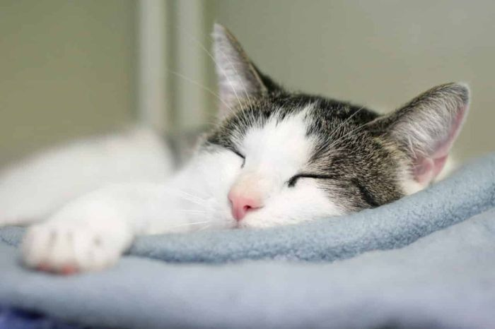 Nếu chiêm bao thấy mèo chết khi trời mưa thì bạn nên vui mừng
