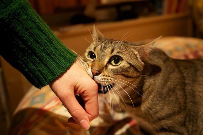 Mơ thấy mèo cắn chảy máu hàm ý rằng bạn đang có một điều kiện rất khá