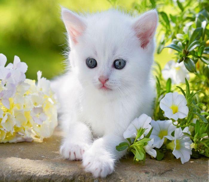 Phần lớn những giấc mộng thấy mèo con đều khiến chủ nhân cảm thấy nhẹ nhõm