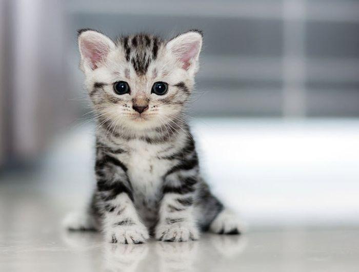 Nếu trong giấc mơ thấy mình tặng mèo con thì ở thực tại  bạn đang trốn tránh trách nhiệm