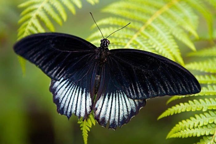 Nếu bạn mơ thấy con bướm thì chứng tỏ cuộc sống đang có nhiều sự đổi mới