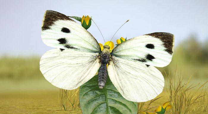 Nằm mơ thấy bướm trắng đậu cành hoa cho thấy bạn đang có nhiều vấn vương với quá khứ