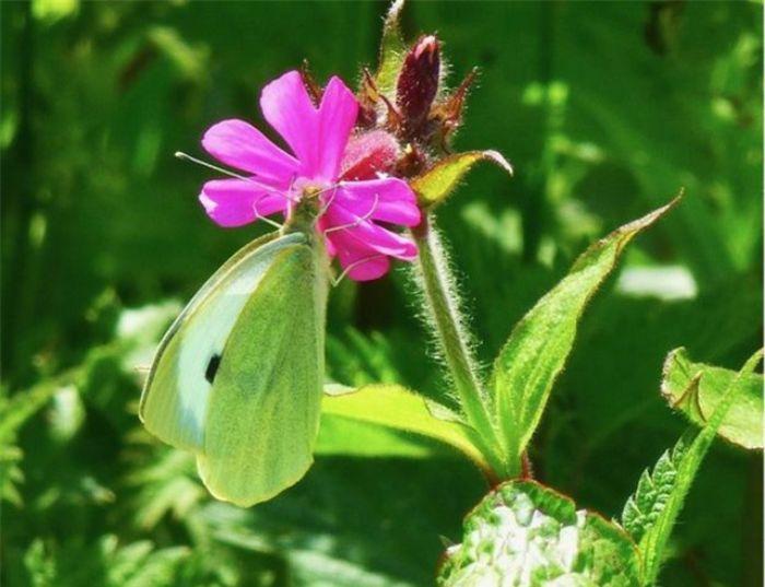 Chiêm bao thấy con bướm màu xanh cho thấy bạn là người nhã nhặn và lịch sự