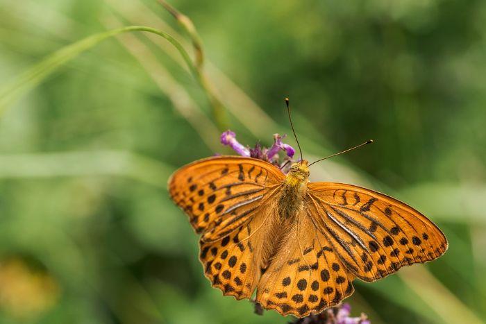Mơ thấy bướm có màu vàng chọn ngay các số 49 - 63